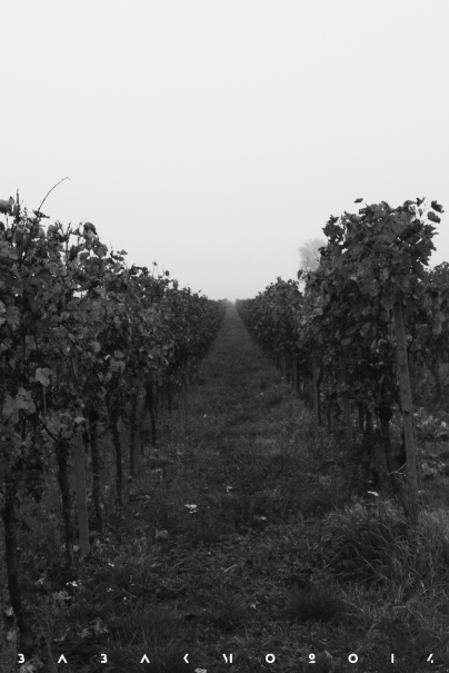 Weinberge in Rheinland Pfalz