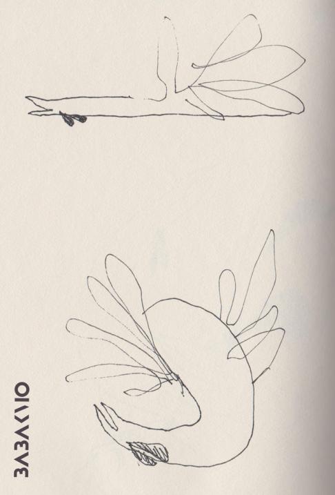 Dancing rooster/illustration/babakmo